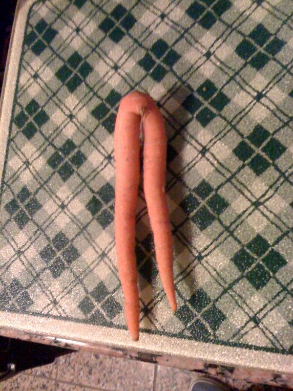 carrot%202