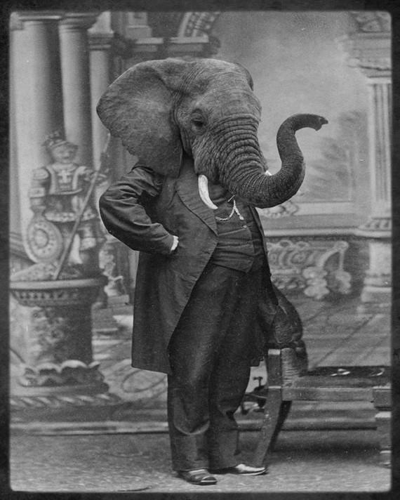 elephant%20head.jpg