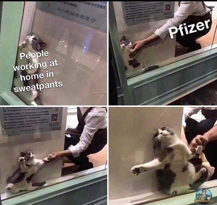 pfizer%20cat.jpg